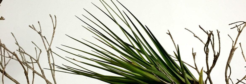 Bromeliads Art Gallery