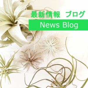 最新情報ブログ News Blog