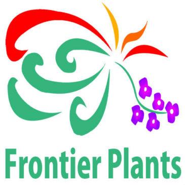 【Frontier Plants】オンラインストア3月16日入荷予定のお知らせ【チランジア・ティランジア】