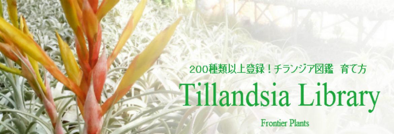 Tillandsia チランジア図鑑