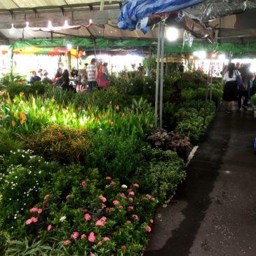 【Frontier Plants】タイ(バンコク)の植物 買い付け旅行記 植物検疫と税関検査編